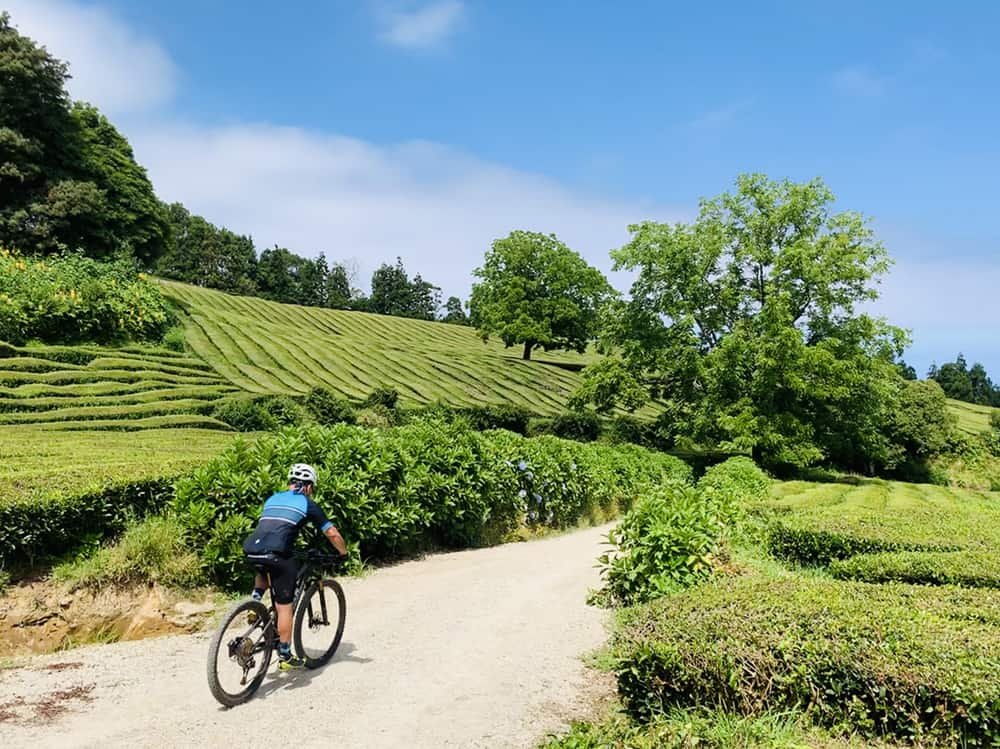 The Trails of Azores P31